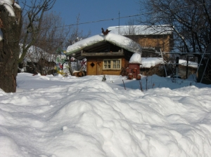 zima_66