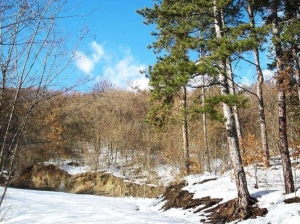 zima_75