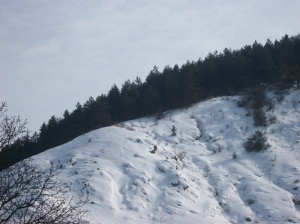 zima_77