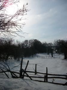 zima_85