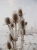 zima_36