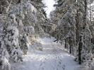 zima_44