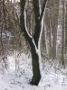 zima_60