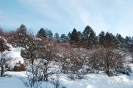 zima_95